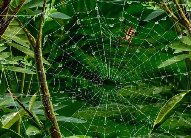spiders-released-into-the-wild