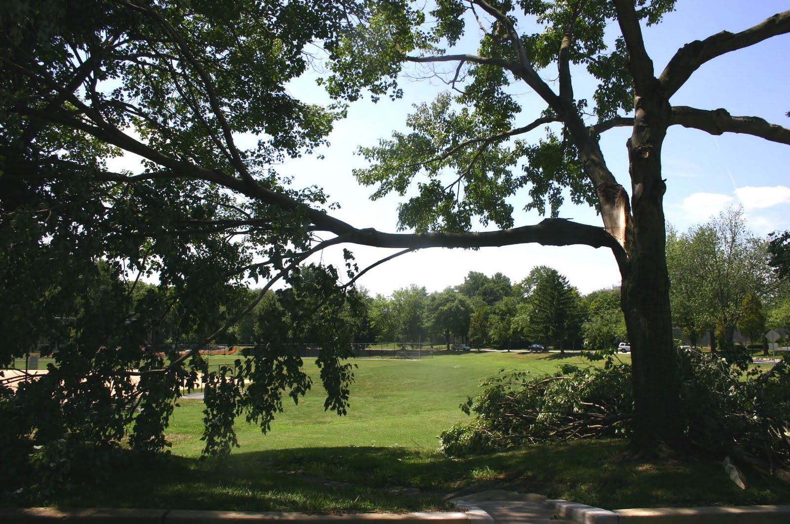 storm damaged trees to be cleaned up in Cleveland
