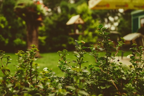 How to take care of garden and weeds
